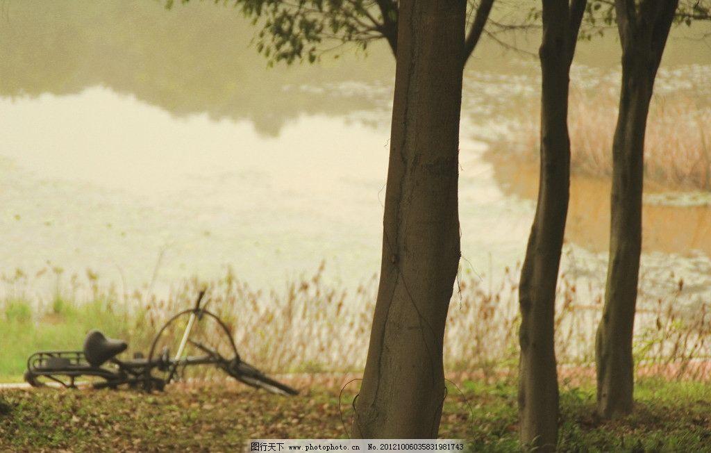脚踏车 树林 树木树叶 生物世界 摄影 72dpi jpg