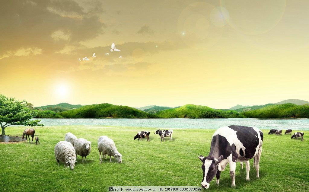 牧场 奶牛 绵羊 水面 草地 马匹 农场 海报设计 广告设计模板