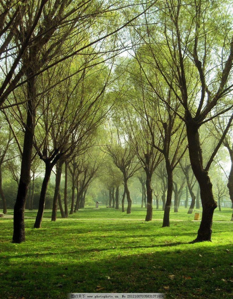 一颗柳树高清风景图片