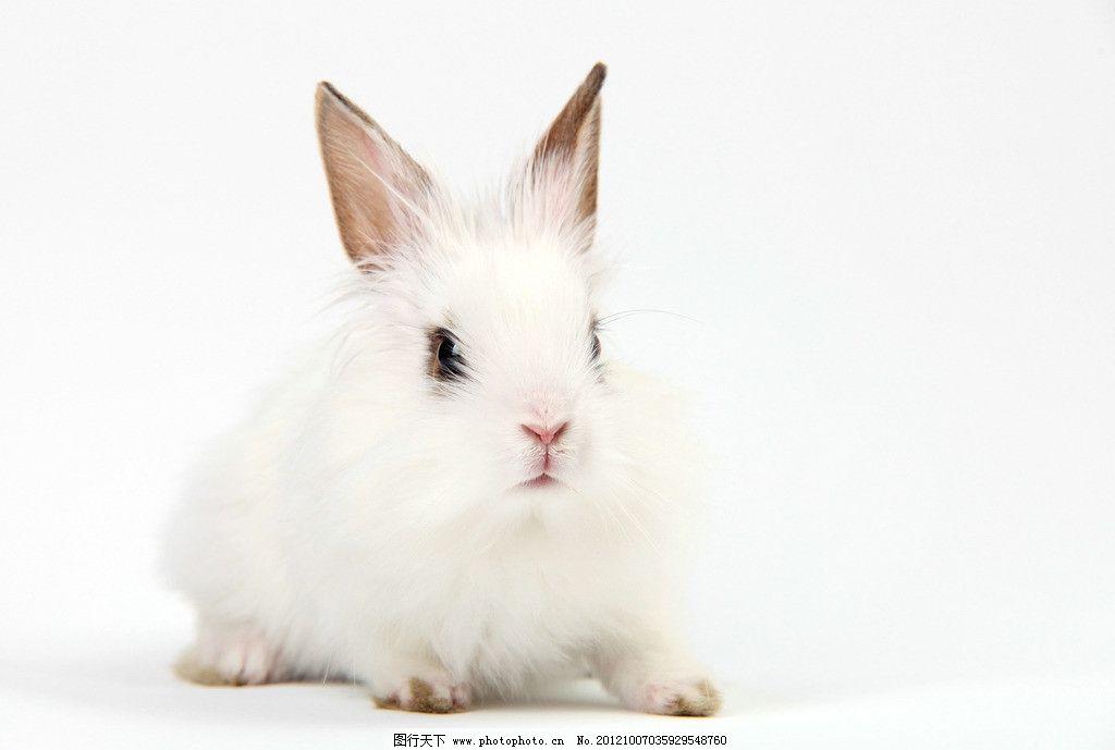 可爱小兔图片