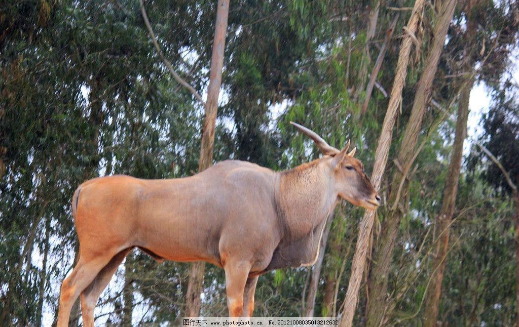四不像图片,动物 鹿 树木 动物园 野生动物 生物世界
