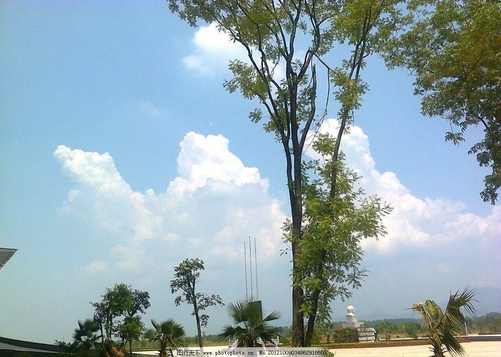 春树 赣南医学院 校园风光 清新 晴朗 舒爽 绿树 蓝天 白云 手拍图 自