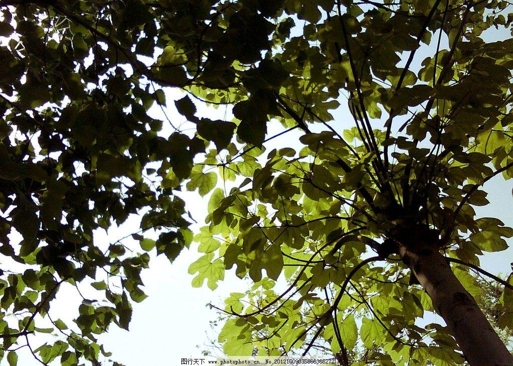 树叶 逆光 夏天 绿树 天空 树木树叶 生物世界 摄影 72dpi jpg