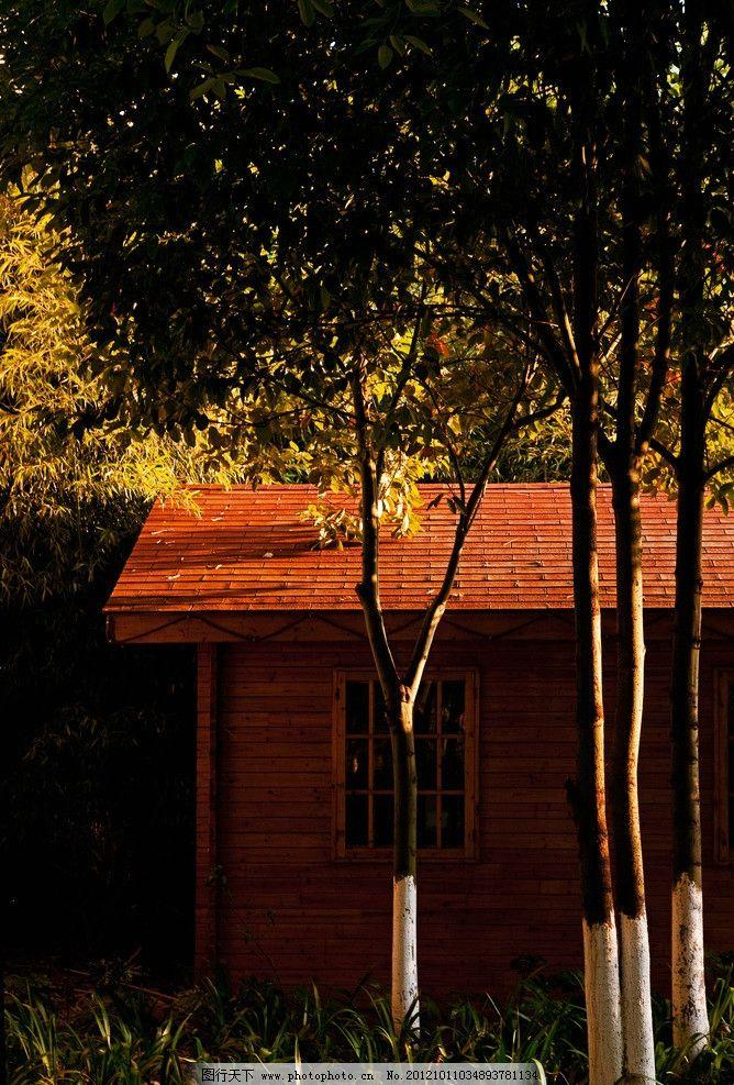 凉山 房子 阳光 小树 草地 阳光洒在树上 自然风景 自然景观 摄影 240