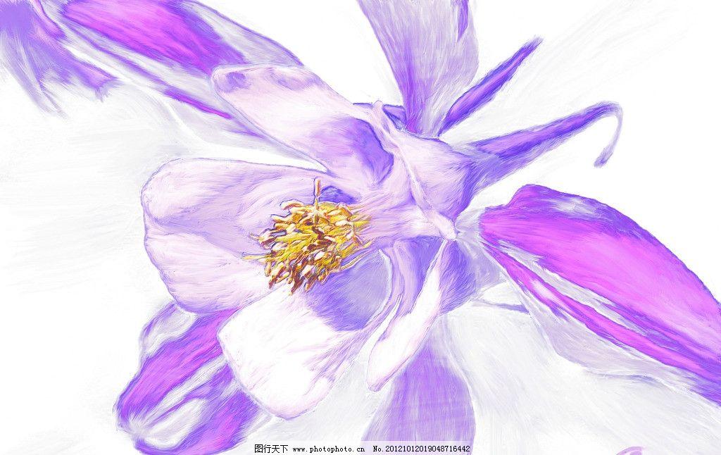 花卉 花 紫色 花朵 手绘花 油画花 绘画书法 文化艺术 设计 100dpi