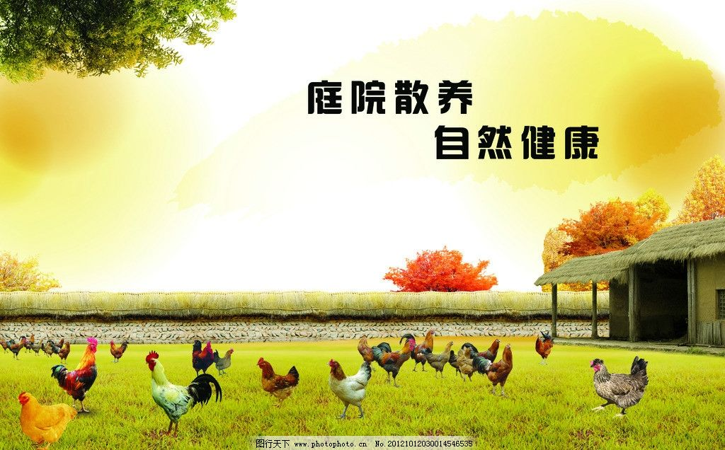 鸡舍 农家/农家鸡舍图片
