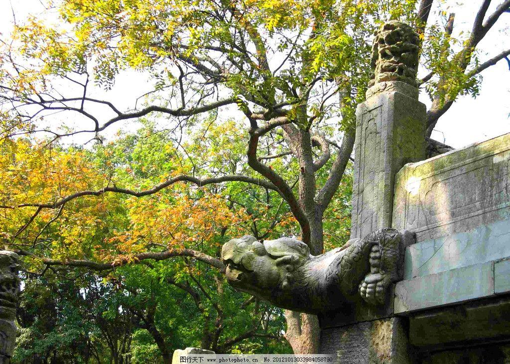 金秋公园 秋天 落叶 大树 龙 石雕 生态 自然 国内旅游 旅游摄影