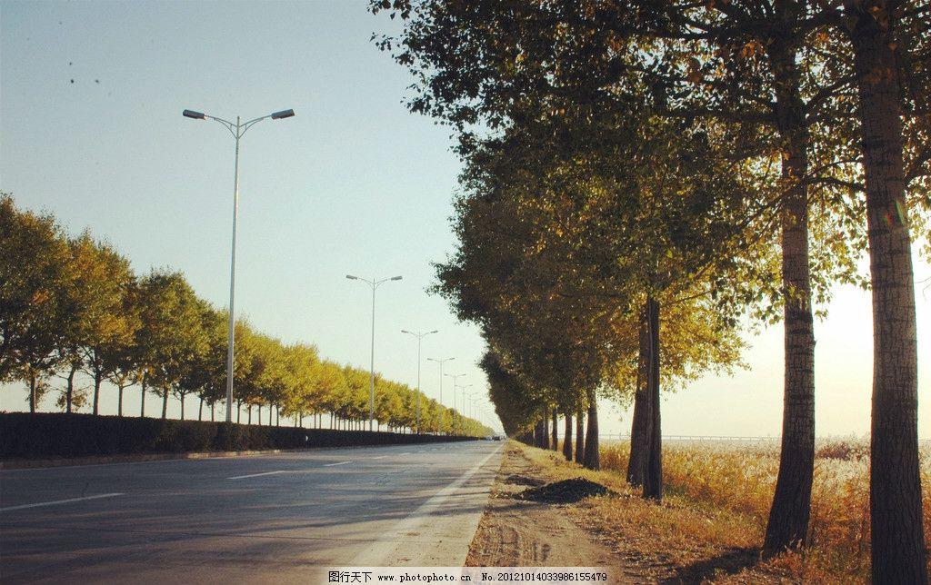 远方 公路 秋天 夕阳 芦苇 树 国内旅游 旅游摄影 摄影 300dpi jpg