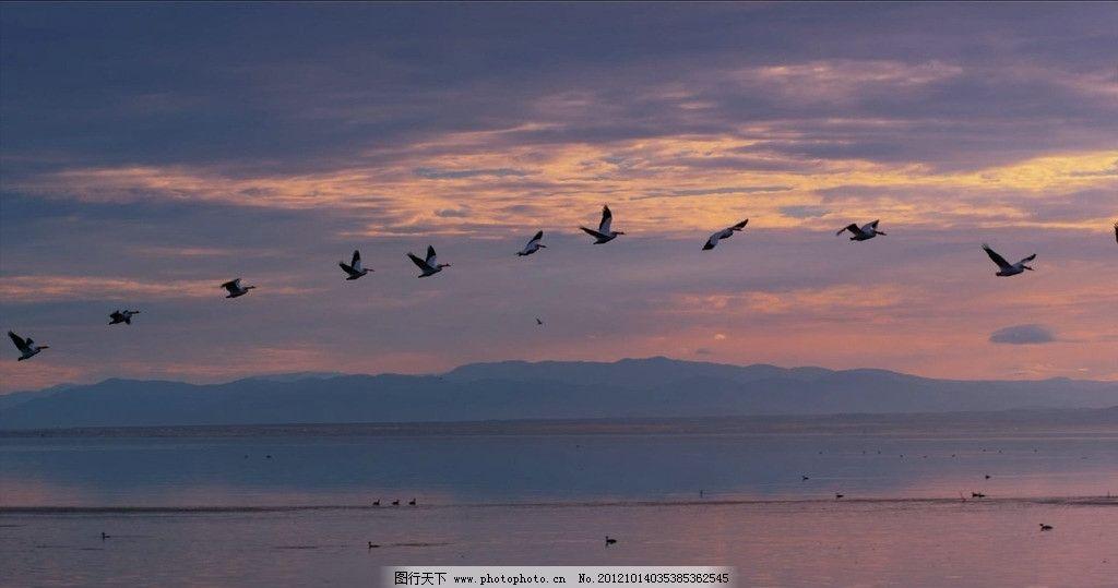 大雁 南非 天空 南飞 漂洋过海 前夕 迁徙 排队 飞翔 鸟类图片