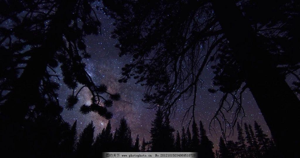 树林星空图片
