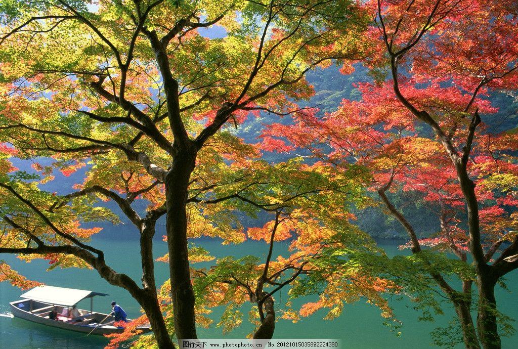秋天红叶摄影图片图片