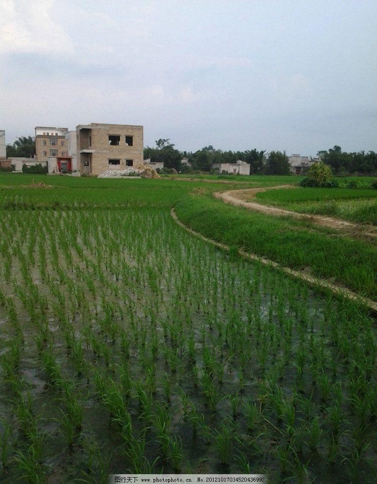 田园风光 乡间小道 家园 村庄 自然景观 摄影 72dpi jpg