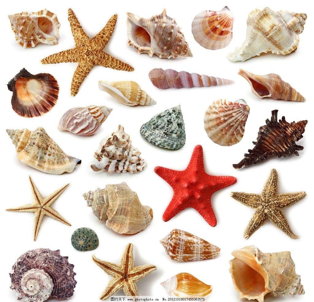 海星 贝壳 海螺 海洋 生物 其他 生物世界