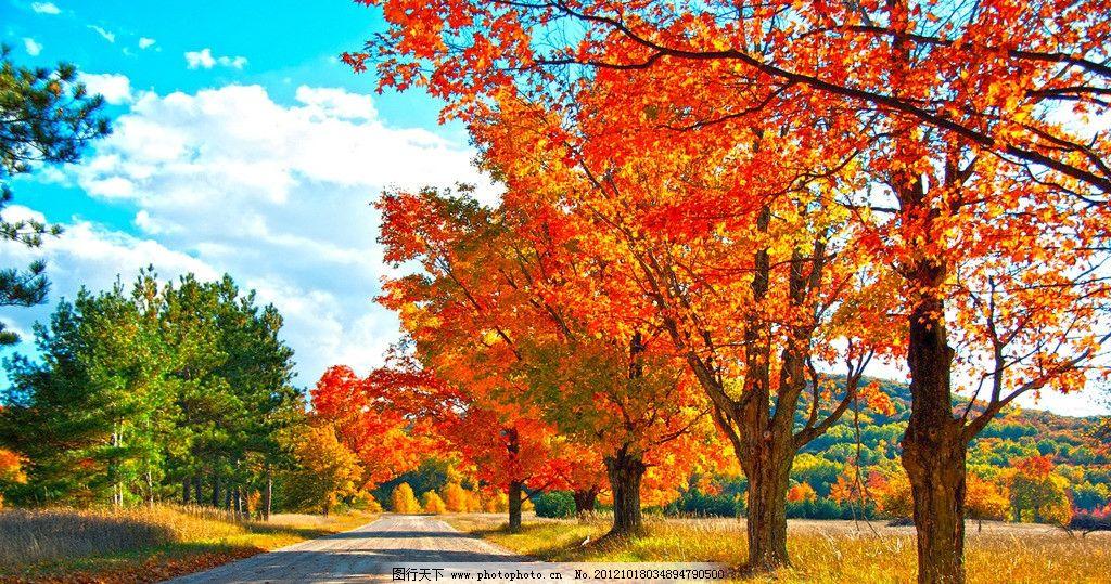 枫林小道 枫叶 自然风光 树林 树木 绿色 风景 旅游 自然风景 自然