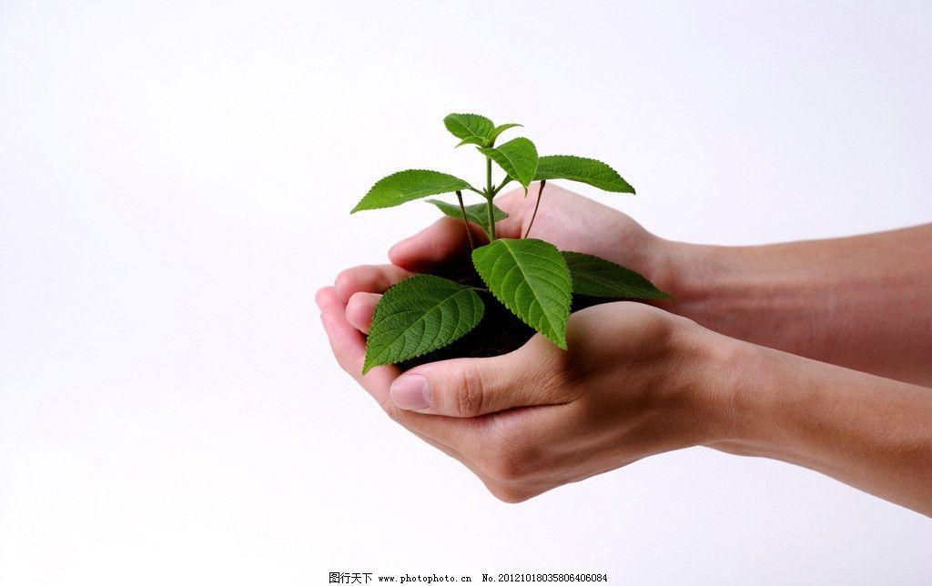 手捧植物 小树苗 绿苗 手捧土壤 绿色植物 植物栽培 生命 绿色 环保 春天