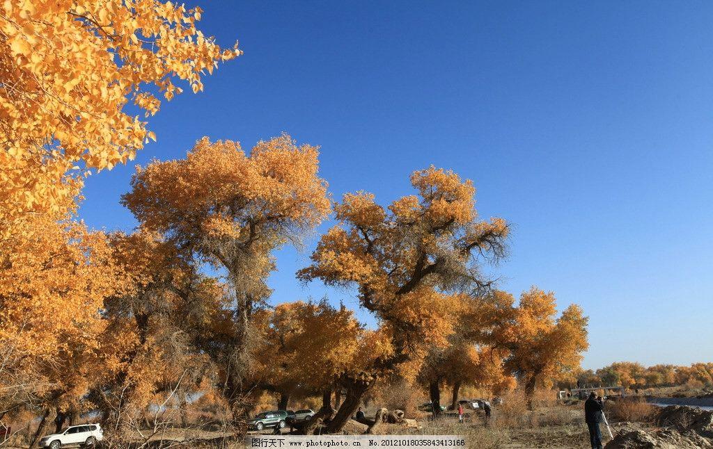 胡杨林 胡杨 千年胡杨 内蒙 额济纳旗 树木树叶 生物世界 摄影 72dpi
