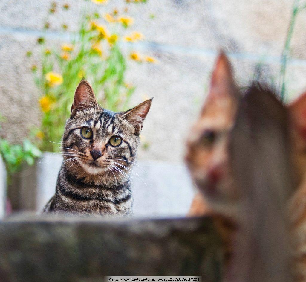 壁纸 动物 猫 猫咪 小猫 桌面 1024_943