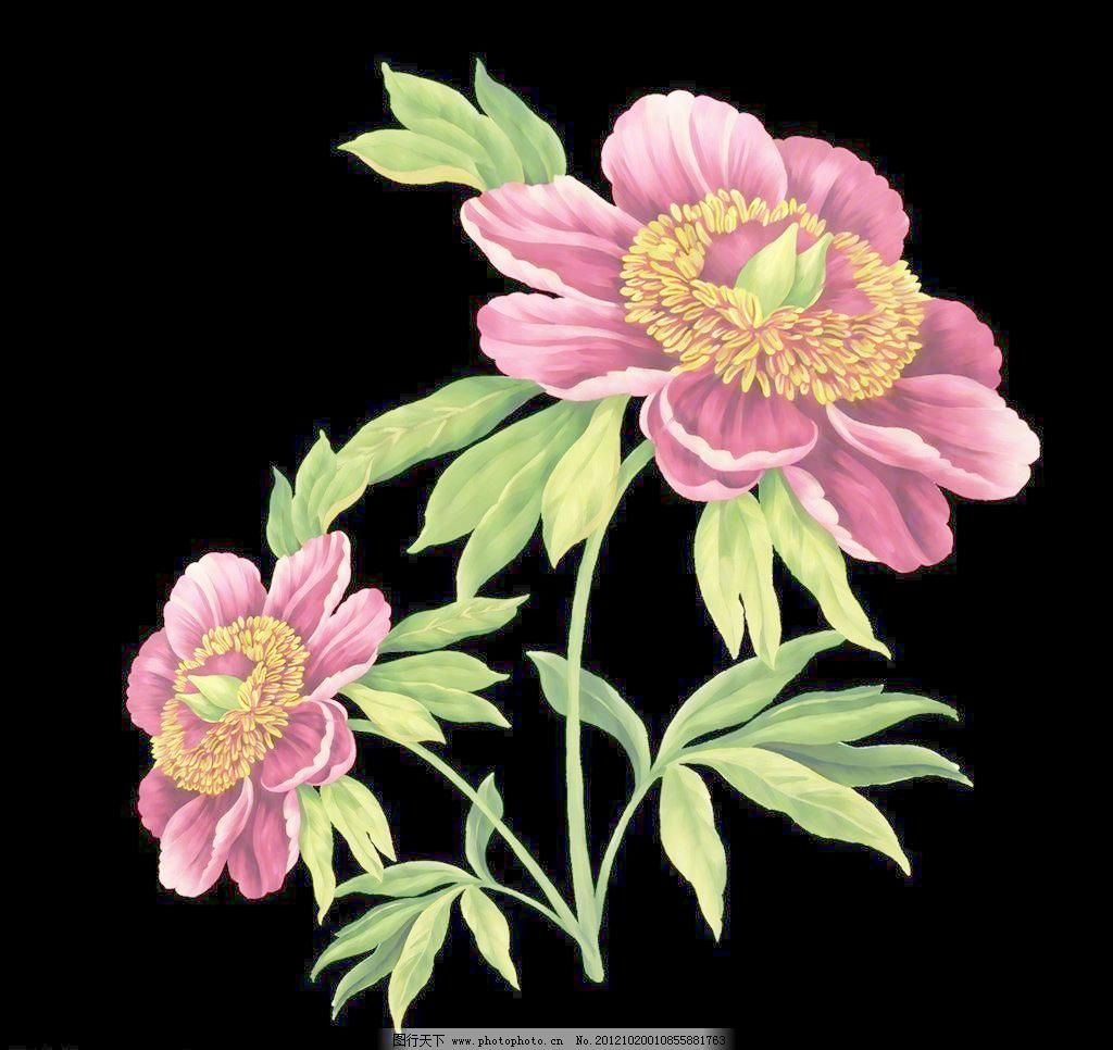欧式手绘花模板下载 欧式手绘花