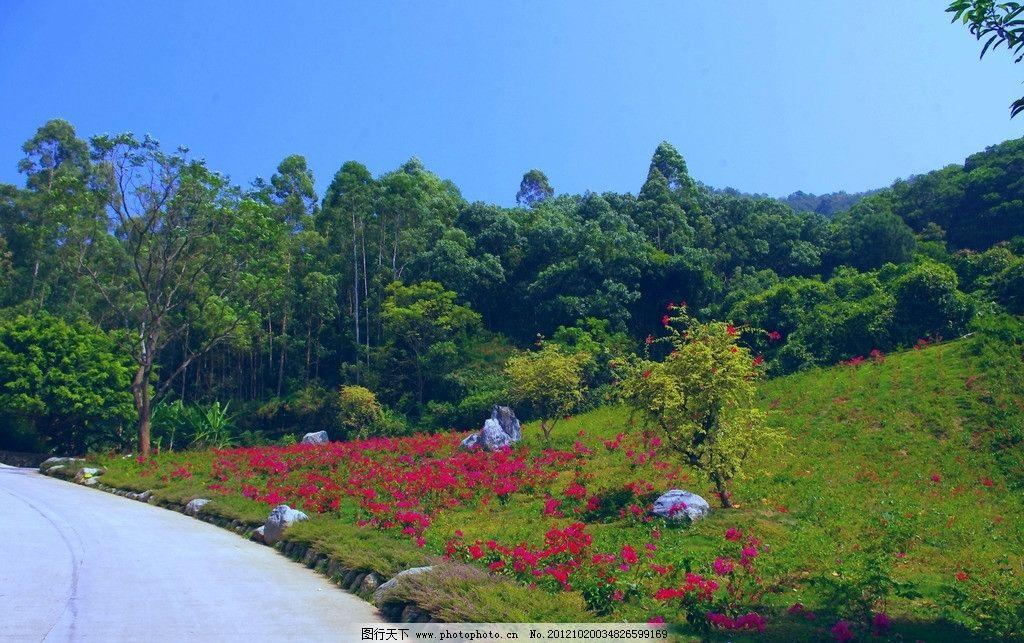 5a级风景区 雁南飞 茶田度假村 广东梅州 雁洋 桥溪路口 风景带 花木