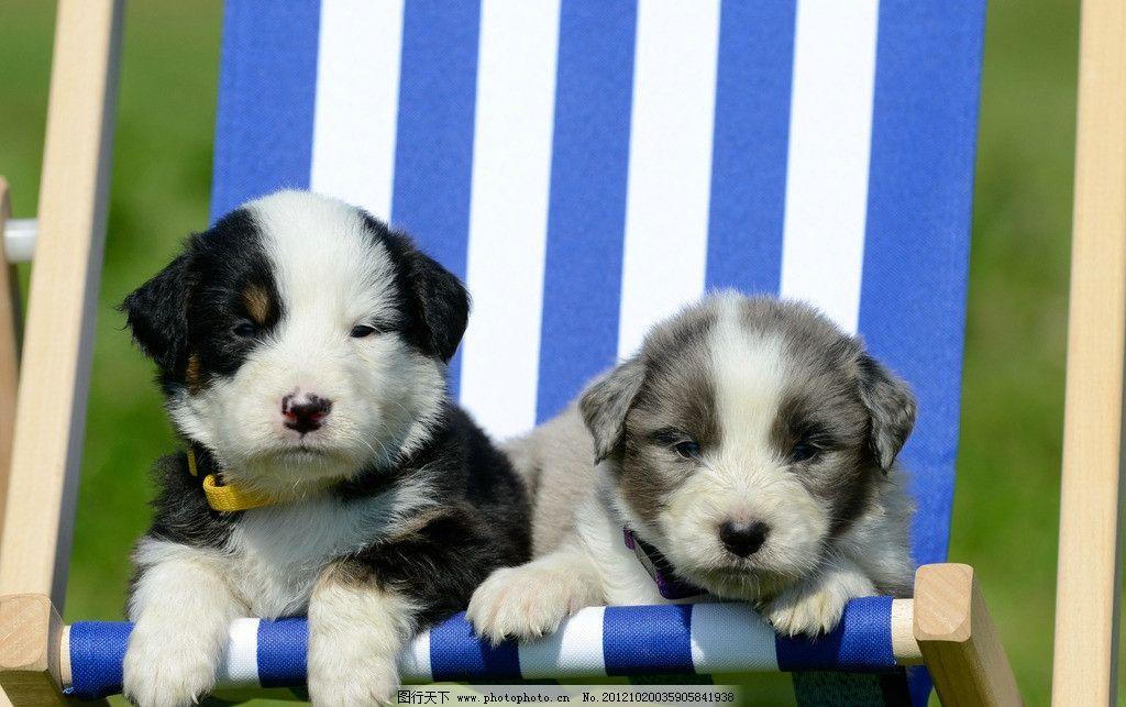两只小狗 躺椅 可爱宠物 名犬 家禽家畜 生物世界 摄影 300dpi jpg