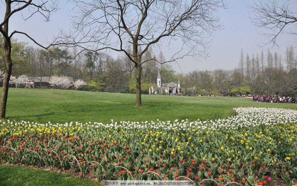 太子湾公园 美丽 小花 花朵 花丛 花儿 春天 郁金香 娇艳 盛开 花展