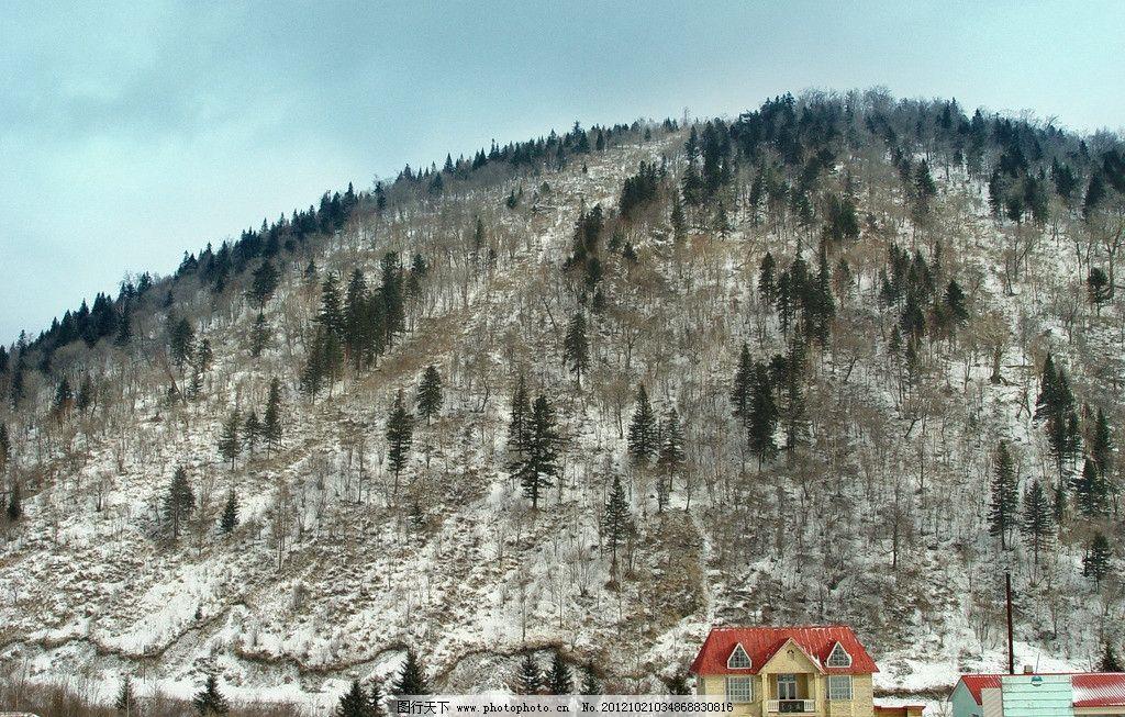 冬季的山 冬景 冬季森林 东北 冬天雪景 树林冬景 白雪覆盖 东北山林图片