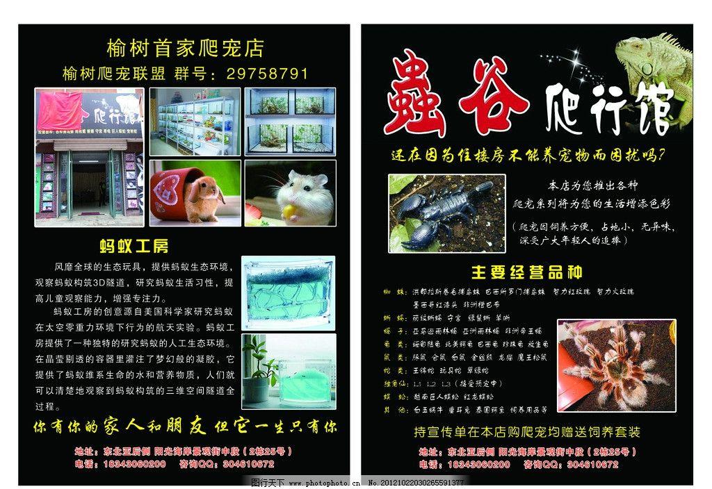 爬行馆宣传单 宣传单 海报 dm单 蚂蚁 宠物兔 蝎子 dm宣传单 广告设计