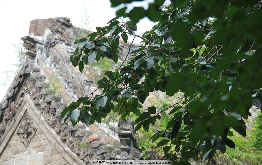 道观前 柿子树 柿子 绿叶 道观 屋顶 古建筑 山花 博风 垂脊 走兽 正
