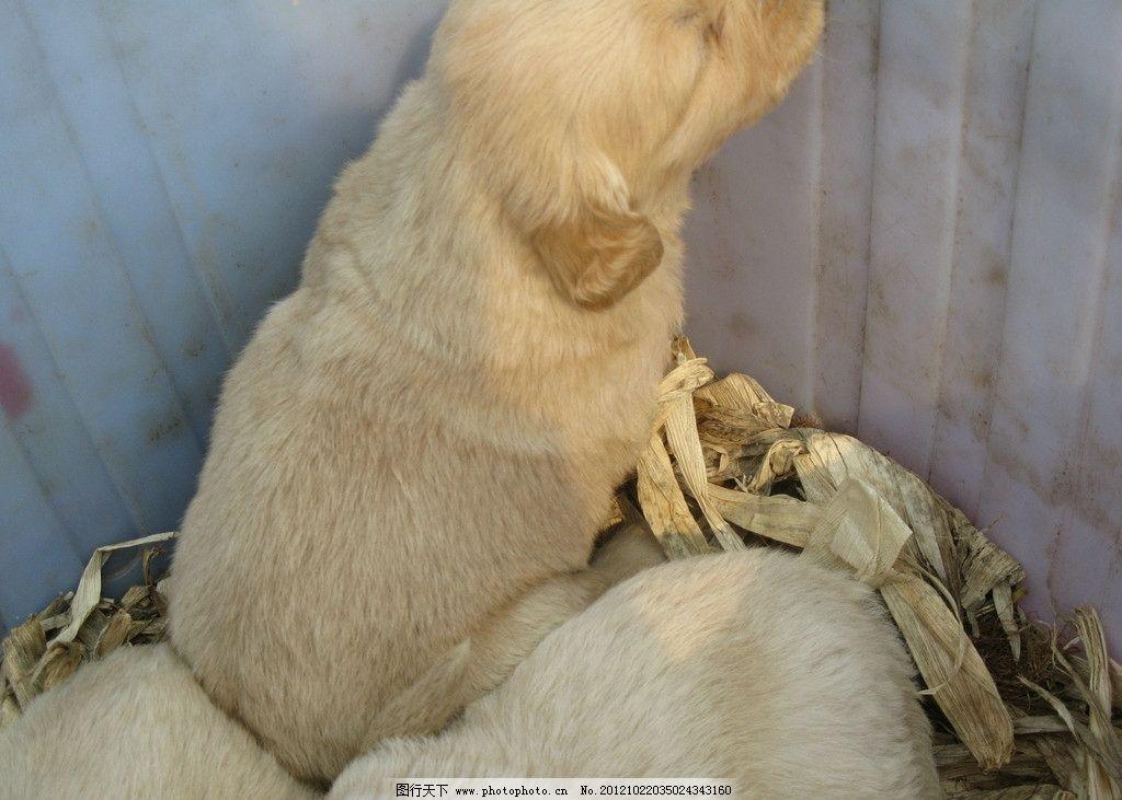 小白兔 笼子 野生动物 生物世界 摄影