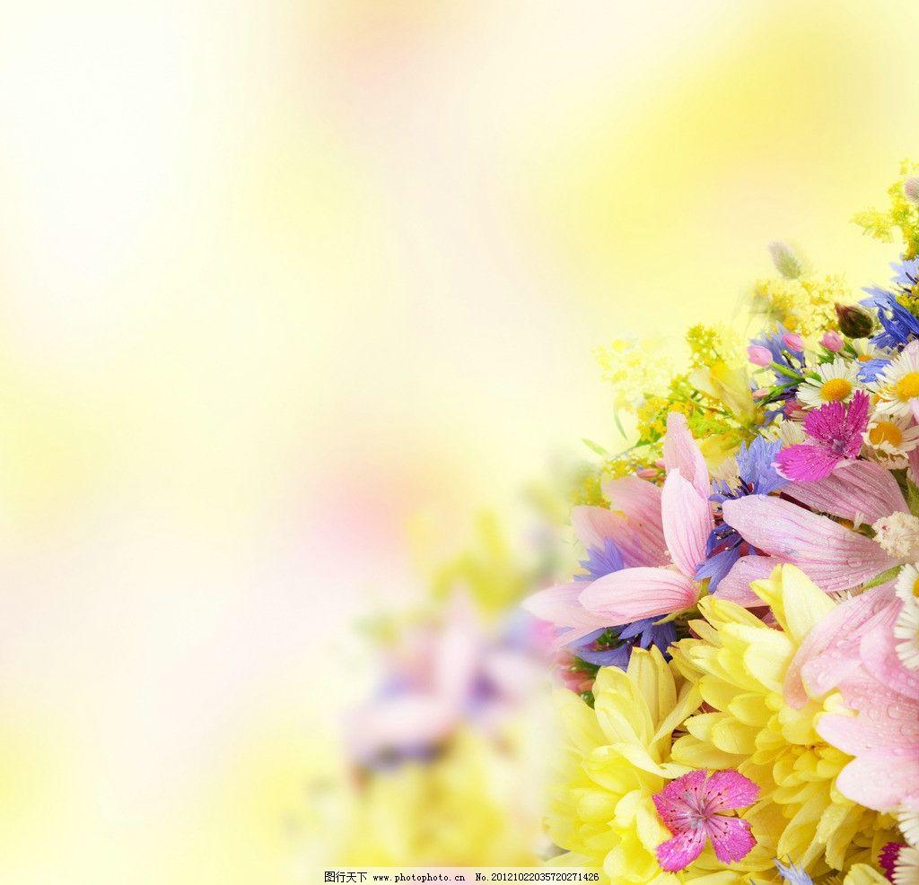 秋季花朵 秋季鲜花 鲜花素材 花束 植物图片 花草 生物世界 摄影 300