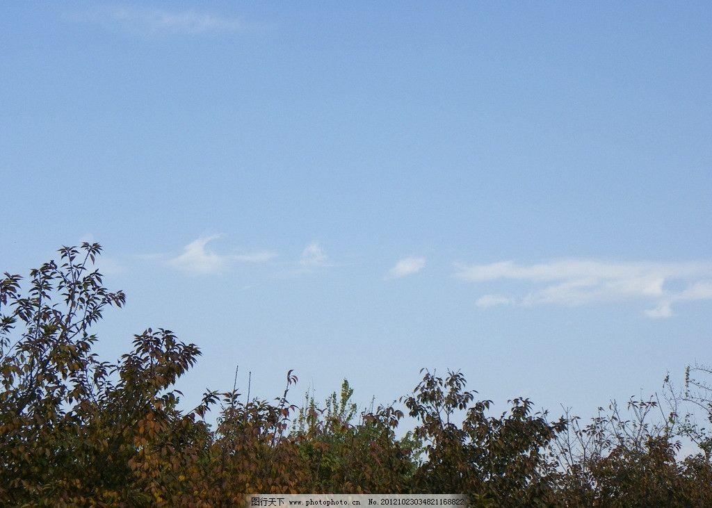 天空景观 天空 晴天 绿树叶 蓝天 树枝 自然风景 自然景观 摄影 72dpi