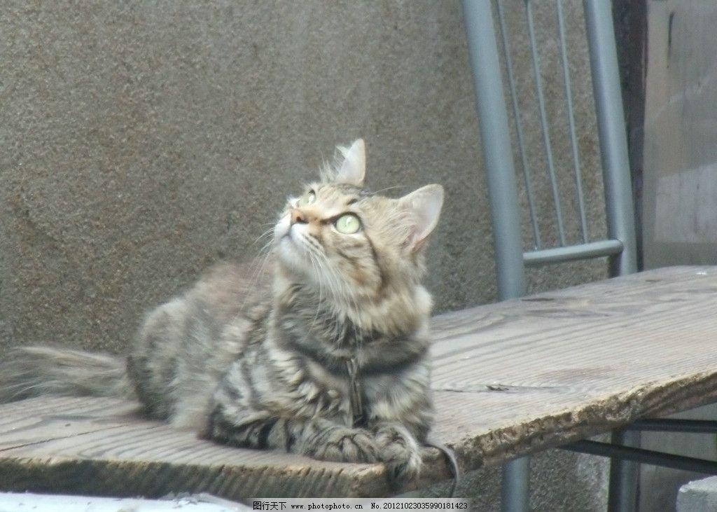 小猫 动物街拍 家禽家畜 生物世界 摄影 72dpi jpg