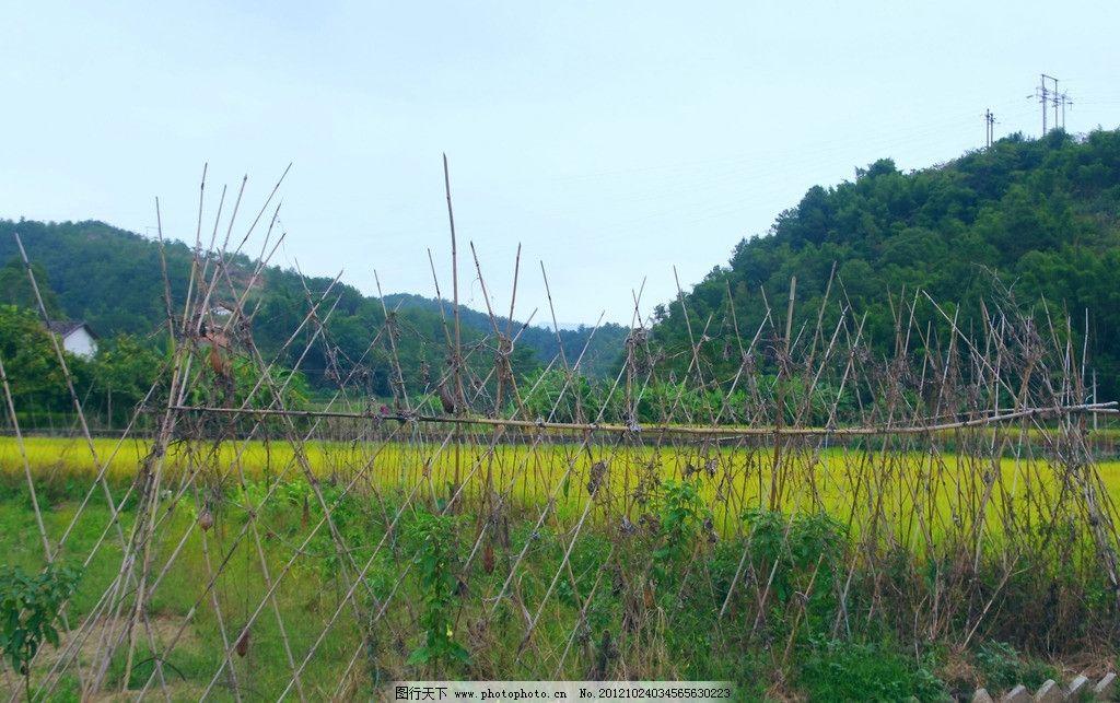 篱笆与稻田 山水风光 篱笆 稻田 山水 风光 客家 乡村 楼角 树木 电杆