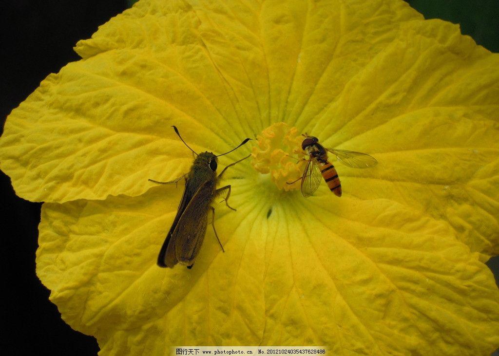 蝴蝶 蜻蜒 蜜蜂 蚊子
