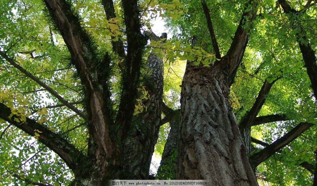 公园大树 公园 大树 树林 树荫 生态公园 森林公园 生态 自然 树木