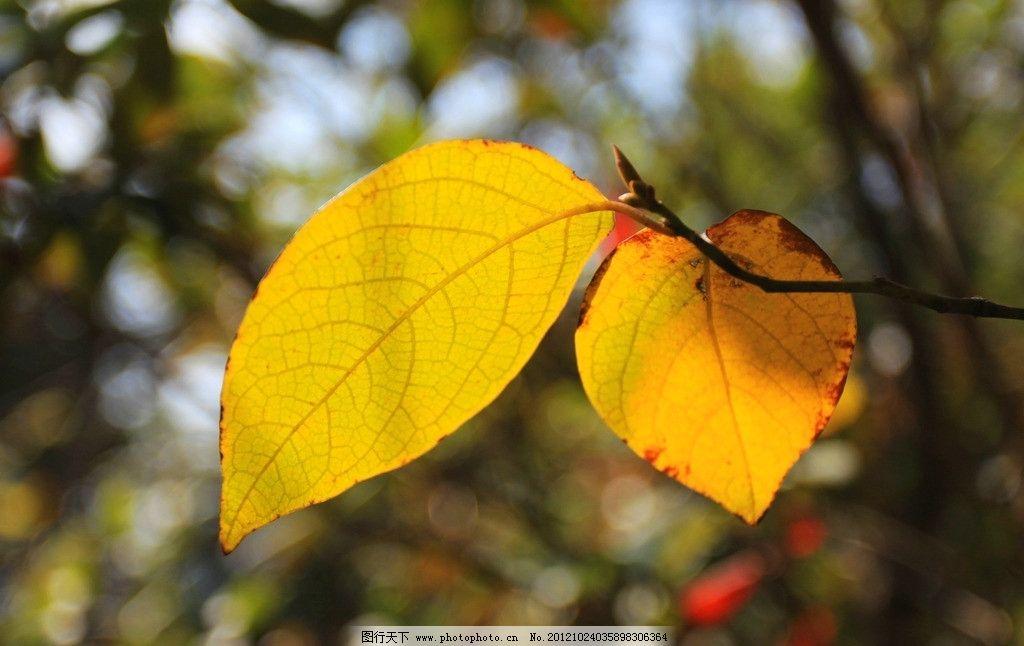 叶子花地板袜编织方法图解