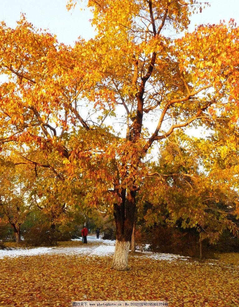 公园风景 秋天 雪景 落叶 公园雪景 黄昏 南湖风景 树林 深秋 金秋