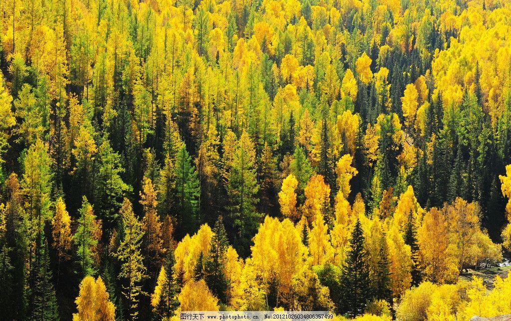 秋天 树林 森林 森林公园 公园 金秋 山林 金黄色 生态 自然 自然风景