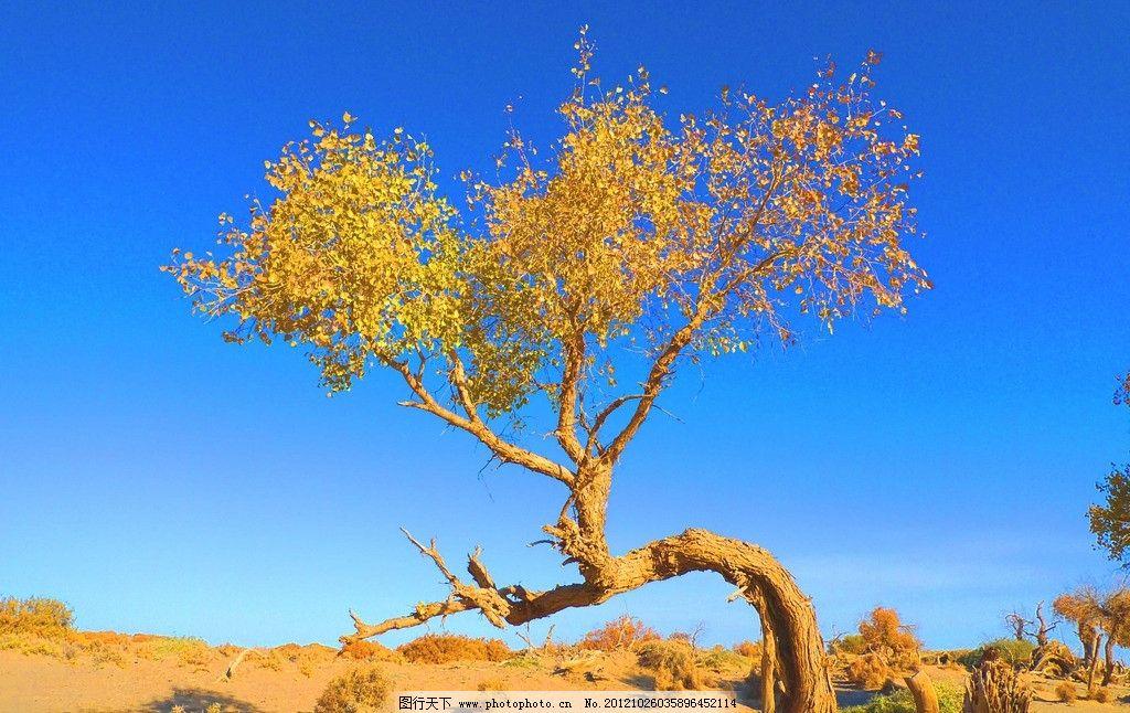 金色世界 胡杨林 胡杨 金秋胡杨 树木树叶 生物世界 摄影 180dpi jpg