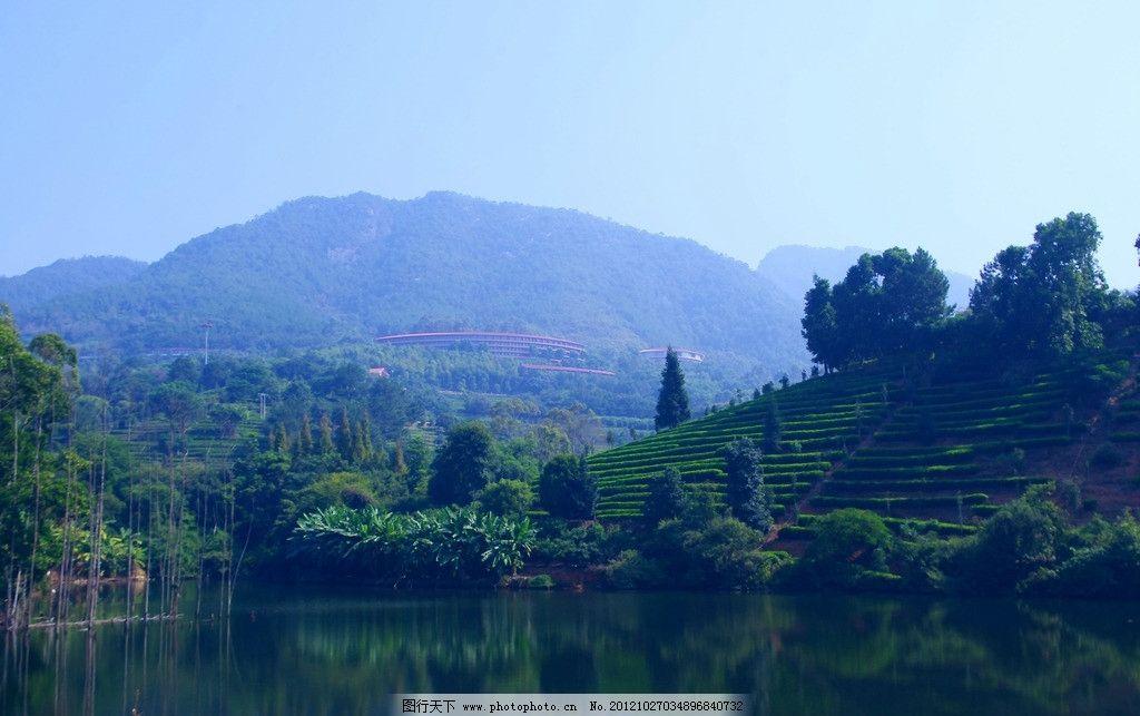 雁南飞 旅途风景 aaaaa国家级 风景区 茶田 度假村 湖水 香蕉 树木