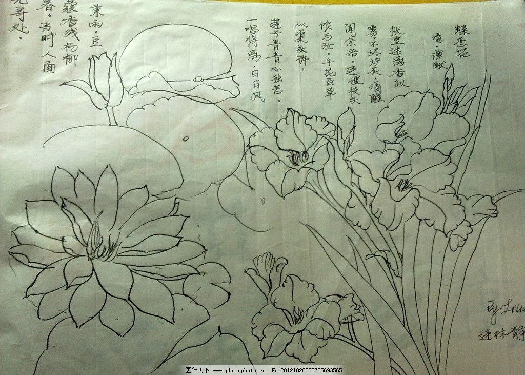 手绘花朵 白描 钢笔画