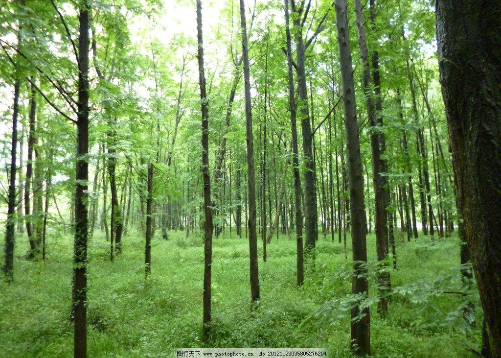 丛林 诸暨五泄 绿色丛林 树木树叶 生物世界 摄影 180dpi jpg