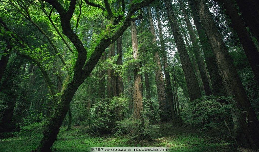 绿色森林 环保 树木 小树 绿草 自然风景 自然景观 摄影