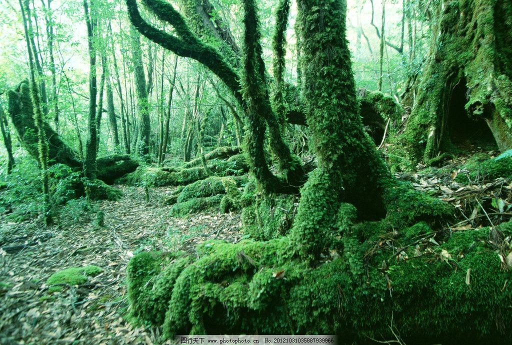 热带雨林 自然景观 旅游 徒步 野外 山水风景 小溪 泉水 森林 树木