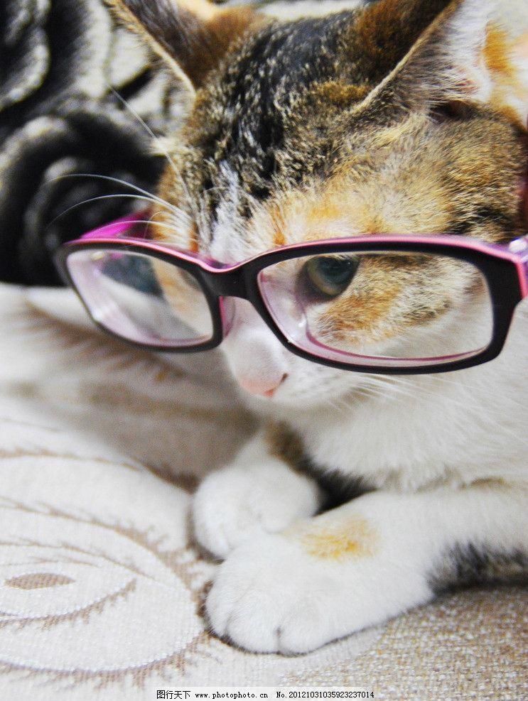 猫咪 小猫 花猫 咪咪 黄猫 宠物 眼镜 大眼睛 爪子 眼线 耳朵 照片 嘴