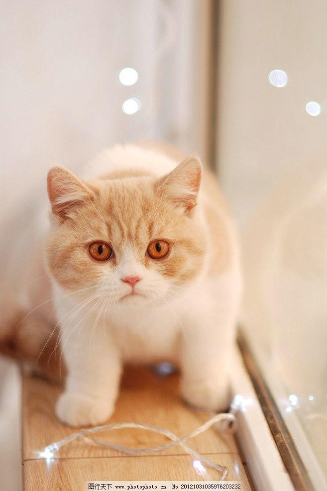 壁纸 动物 猫 猫咪 小猫 桌面 657_987 竖版 竖屏 手机