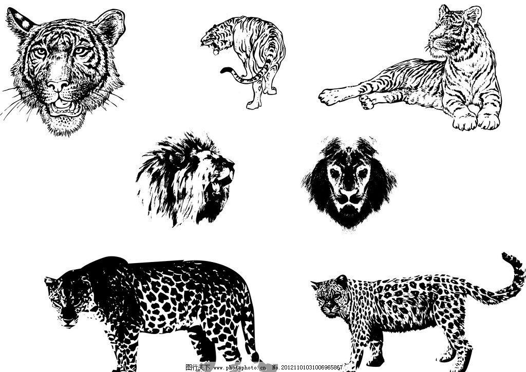 狮虎豹 狮 虎 豹 动物 矢量 黑白 线条 其他设计 广告设计 cdr