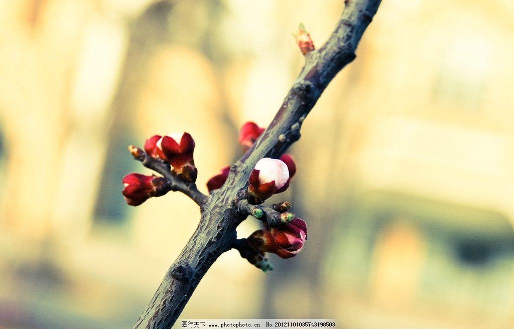树枝做的动物图片
