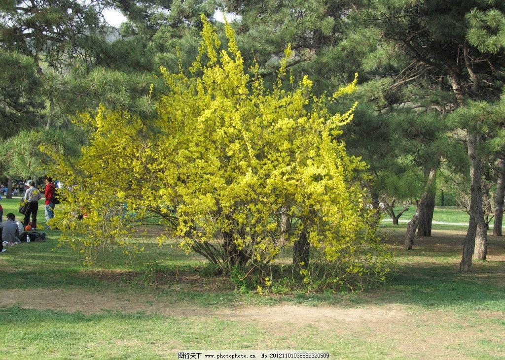 风景 风景图片 绿色的树 黄色的叶子 草地 唯美的图片 春天 树木树叶