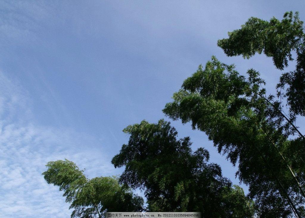 绿树 风吹 树摇 天空 树木树叶 生物世界 摄影 72dpi jpg